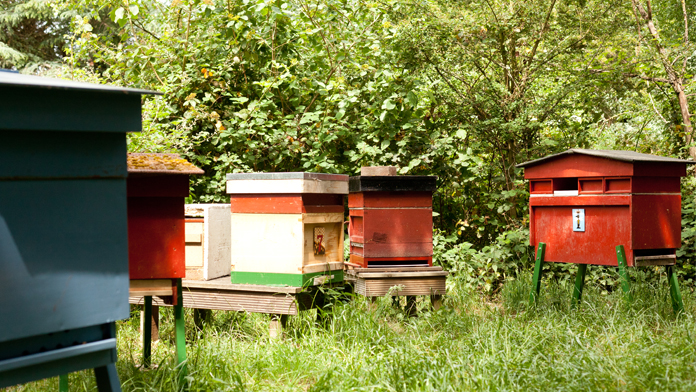 undefinedThe Benslow bees and hives in our beautiful gardens