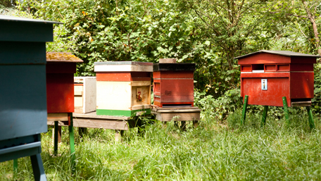 The Benslow bees and hives in our beautiful gardens